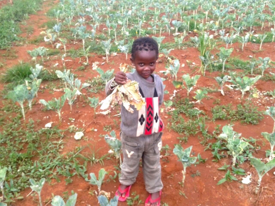 an African child in a cultivated field